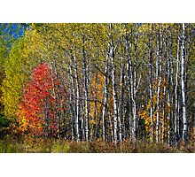 North Woods Autumn Photographic Print