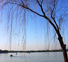 A Tree Leans Over Kunming Lake by KatyF