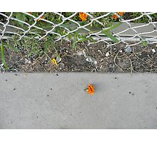 know no fence Photographic Print