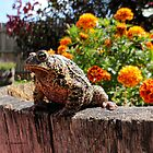 Adorable Toad with little orange flowers. by Barberelli