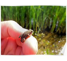Baby Toad by the pond. Poster