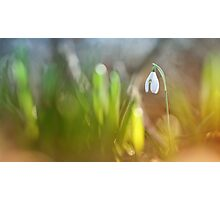 Lonely snowdrop... Photographic Print