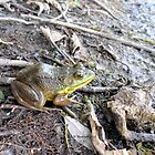 Glenn the Relaxing Frog by Barberelli