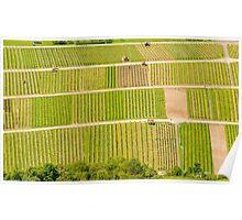 German Vineyards Poster