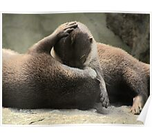Otters cuddling Poster