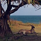 Under the shade of a Pandanus Tree by myraj