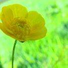 Simple Buttercup. by Livvy Young