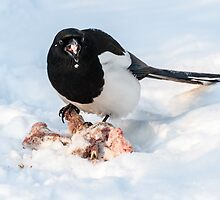 Feast for a magpie by Eivor Kuchta