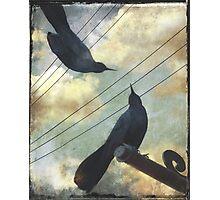 Blackbirds Chat Photographic Print