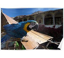 Incan Macaw Poster