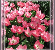 Pink Tulips Vignette in Mirrored Frame by BlueMoonRose