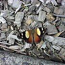 Butterfly by AmandaWitt