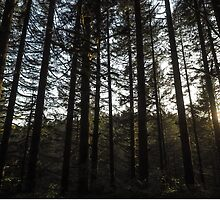 Sundown in the Sticks by hrmurray