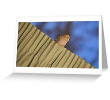 bird sitting upon curtain Greeting Card