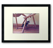 Kitten in spinning wheel Framed Print