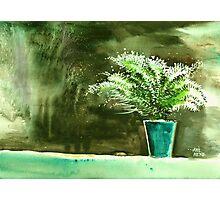 Bay window plant Photographic Print