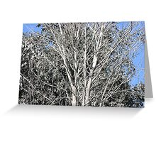 tree after eruption of Mount Merapi Greeting Card
