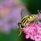 Hoverfly  [ Helophilus pendulus ] by relayer51