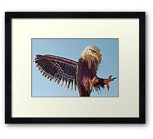 Eagle of vegetables Framed Print