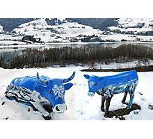 Swiss mountain-cows Photographic Print