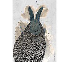 Hare - owl Photographic Print