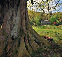The Old Oak Tree, Grasmere by FyldePhotos