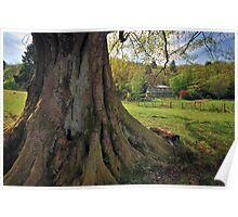 The Old Oak Tree, Grasmere Poster
