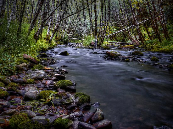 Deep In The Forest It Glows by Charles & Patricia   Harkins ~ Picture Oregon