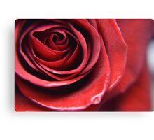 Rose's Bloom Canvas Print