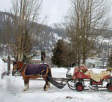 Anyone interested in a sleigh-ride? by Arie Koene