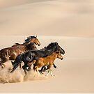Running Wild - Mongolia by Robert van Koesveld