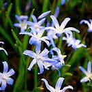 Blue Spring 2 by Joy Fitzhorn
