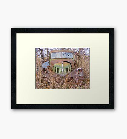 Weathered Friend Framed Print