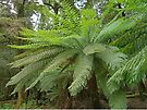 Tree Ferns in Dip Forest by Graeme  Hyde