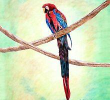 Parrot by Linda Ginn Art