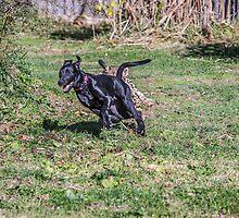 Savannah chases Max by Leon Herbert