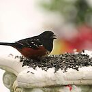 TOWHEE ON SNOW DAY... by RoseMarie747