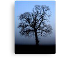 Misty morning oak - enhanced Canvas Print