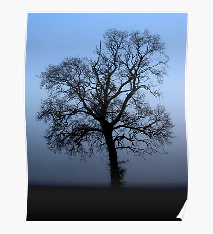 Misty morning oak - enhanced Poster