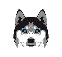 Husky Face Blue Eyes Photographic Print