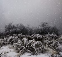 """""""Winter Snowstorm"""" by CanyonWind"""