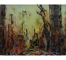 Birnam Wood II Photographic Print