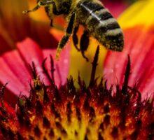 Busy Buzzing Bee Sticker