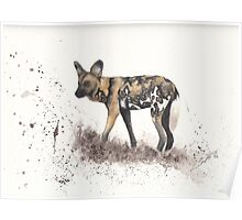 African Wild Dog #2 - Lycaon pictus Poster