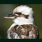 Kookaburra Profile by mncphotography