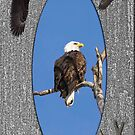 Life Of The American Bald Eagle by Thomas Young