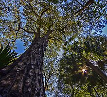 Suburban Rainforest Churchpoint NSW by Doug Cliff