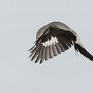 shrike hovering by jamesmcdonald