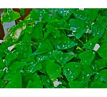 Happy St. Patrick's Day Photographic Print
