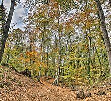 Walking Throw Jordan's Beech Wood by Marc Garrido Clotet